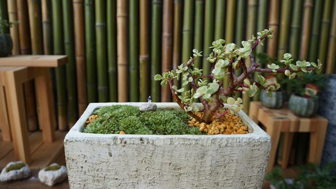 テーブル盆栽 テーブルボンサイ BONSAI