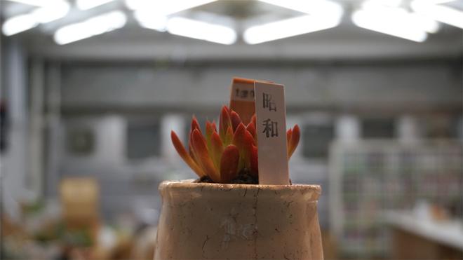 ヒコみづの学園祭