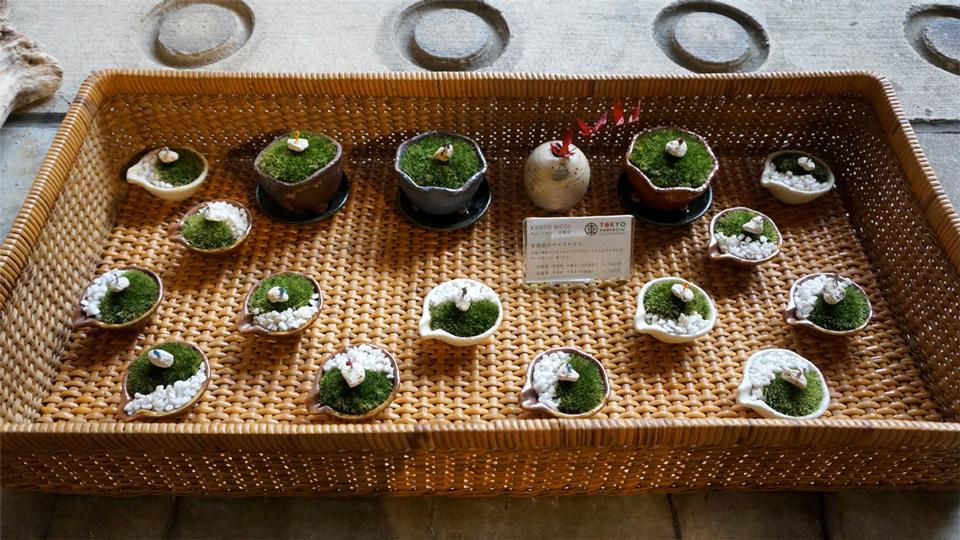 Kyoto Moss 苔盆栽 京都苔