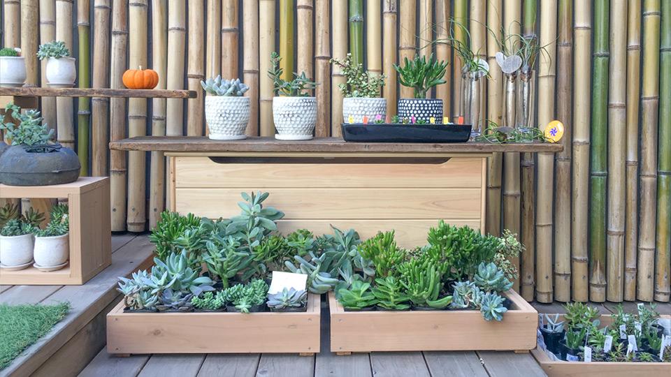 多肉植物 Succulents