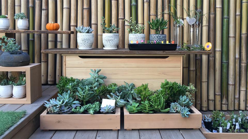 TOKYO FANTASTIC OMOTESANDO 表参道 多肉植物