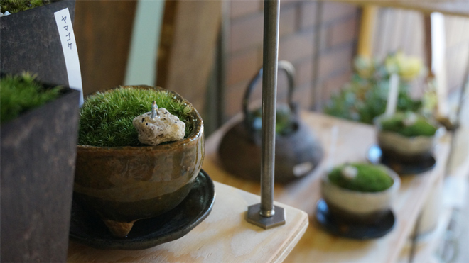 Kyoto Moss