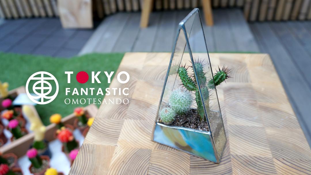 7.18(月)ステンドグラステラリウム&サボテン寄せ植えワークショップ開催!