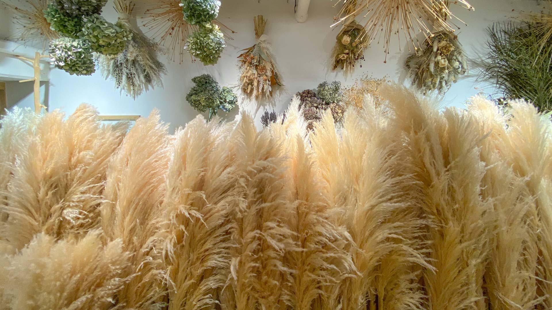 ふわふわなパンパスグラス Pampas Grass
